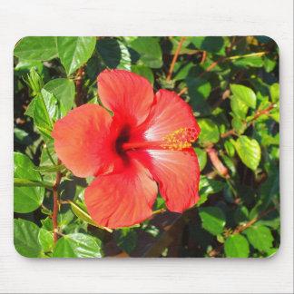 Mousepad Flor do hibiscus