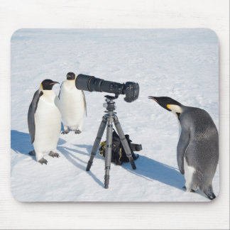 Mousepad Fotógrafo do pinguim - tapete do rato