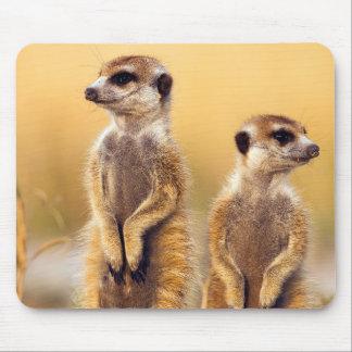 Mousepad Meerkats bonito que senta-se acima