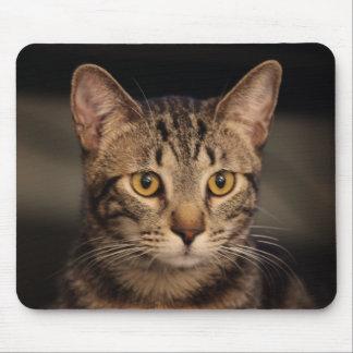 Mousepad Meu gato Matt Damon