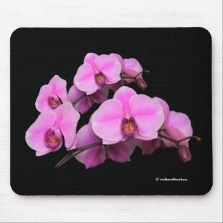 Mousepad Phalaenopsis cor-de-rosa elegante das orquídeas no