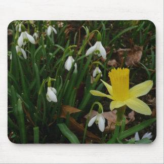 Mousepad Snowdrops e o Daffodil saltam cedo flores