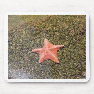 Mousepad starfish.JPG de vida