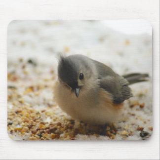 Mousepad Titmouse adornado adorável