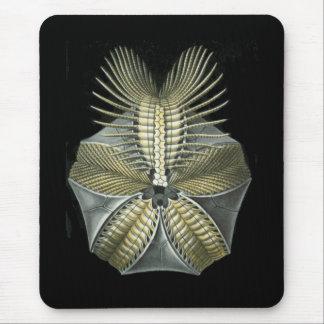 Mousepad Um diabrete de mar fóssil