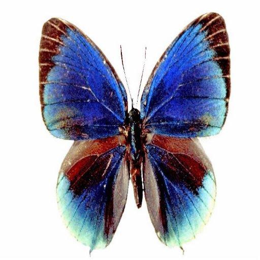 Multi borboleta colorida original escultura foto
