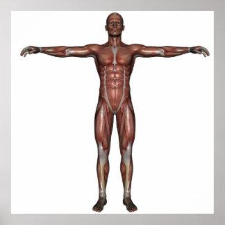 Músculo do poster do homem