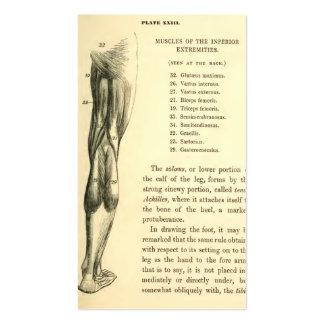 Músculos do pé da anatomia | do vintage cartão de visita