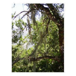 Musgo da árvore cartão postal