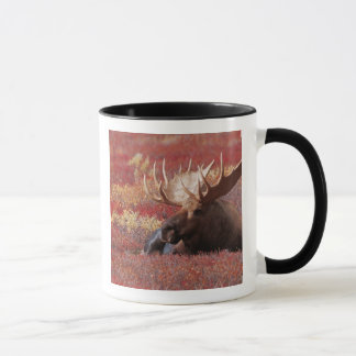 N.A., EUA, Alaska, parque nacional de Denali, Bull Caneca