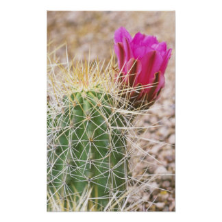 N.A., EUA, AZ, Phoenix, abandonam botânico Posters