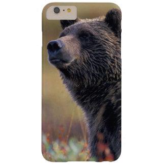 NA, EUA, Alaska, Denali NP, urso de urso Capa Barely There Para iPhone 6 Plus