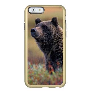 NA, EUA, Alaska, Denali NP, urso de urso Capa Incipio Feather® Shine Para iPhone 6