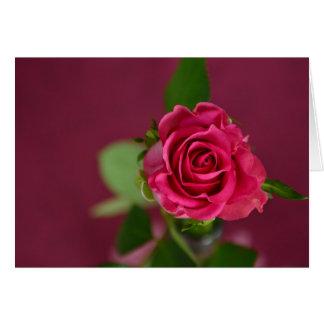 Namorados profundos do rosa da magenta cartão