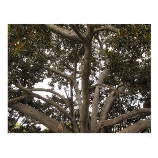 nas árvores cartão postal
