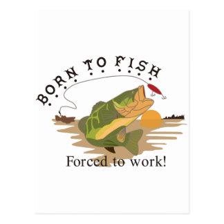 Nascer aos peixes cartão postal