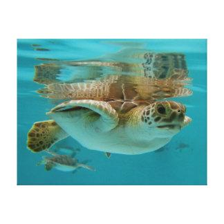 Natação da tartaruga de mar verde do bebê