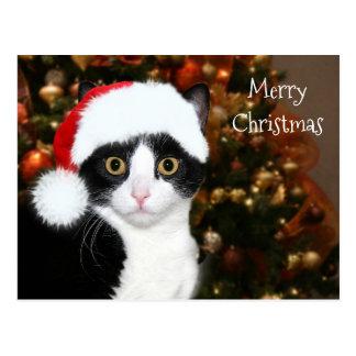 Natal do gato do smoking cartão postal