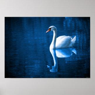 Natureza da água do pássaro da cisne bonita poster
