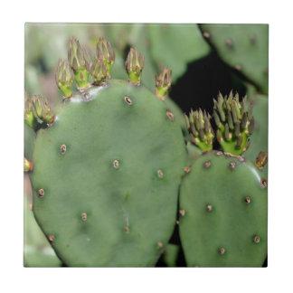Natureza do cacto de pera espinhosa azulejo quadrado pequeno
