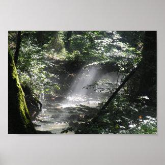 Natureza escondida poster