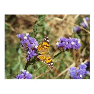 natureza eterna cartão postal