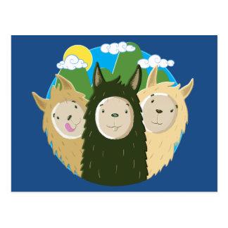Nenhuns irmãos dos lamas do drama cartão postal