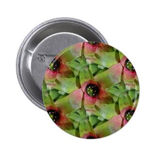 Neoregelia Bromeliad 'lanç Salad Bóton Redondo 5.08cm