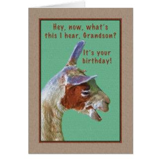 Neto, aniversário, cartão de riso do lama