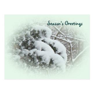 Neve no Vitae do mandril Cartão Postal