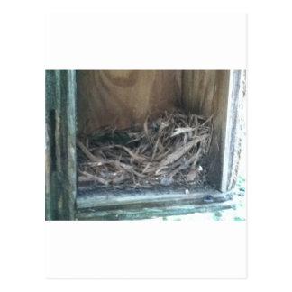 Ninho do Birdhouse Cartão Postal