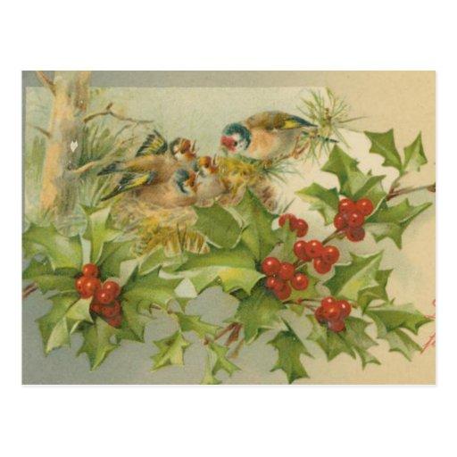 Ninho dos pássaros do natal vintage cartao postal