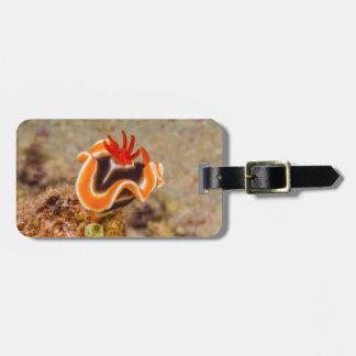 Nudibranch colorido do mar coral etiqueta de bagagem