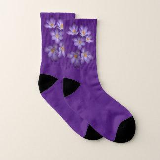 O açafrão roxo floral do primavera floresce meias
