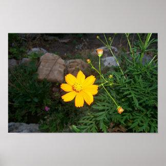 O amarelo das naturezas poster