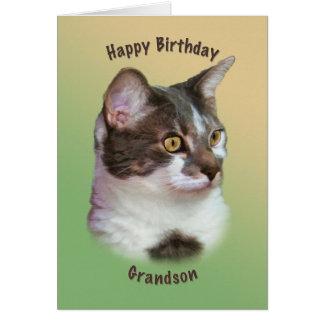 O aniversário, neto, gato Ouro-eyed, deseja o cart Cartao