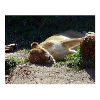 O antro dos leões cartão postal