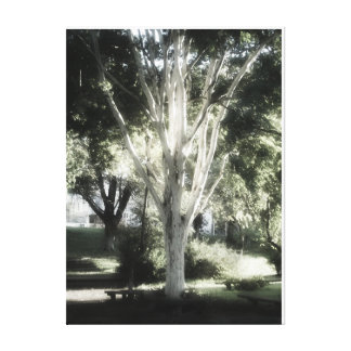 O árbol do EL de L'arbre do árvore da árvore A
