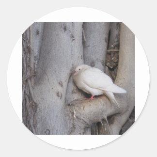 O branco carnudo mergulhou na árvore adesivo