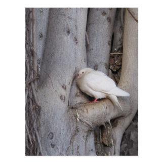 O branco carnudo mergulhou na árvore cartão postal