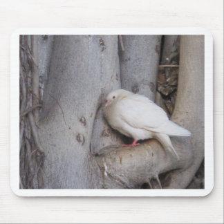 O branco carnudo mergulhou na árvore mousepads