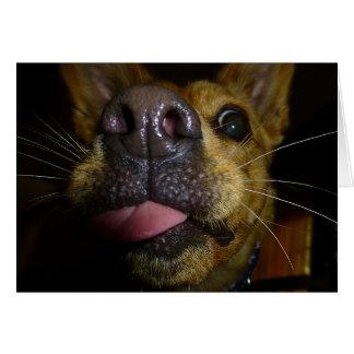 O cachorrinho beija cartões