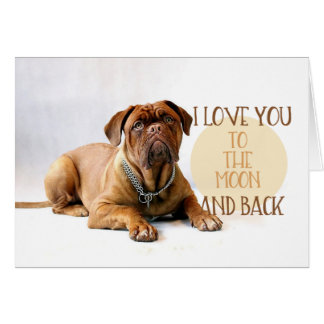 O cão ama-o à lua e ao cartão traseiro