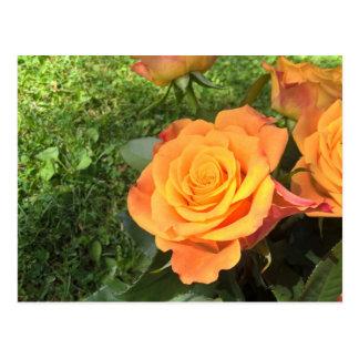 O cartão da foto da flor com laranja bonita cartão postal
