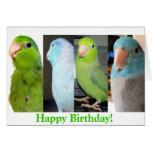O cartão do pássaro do feliz aniversario de Parrot