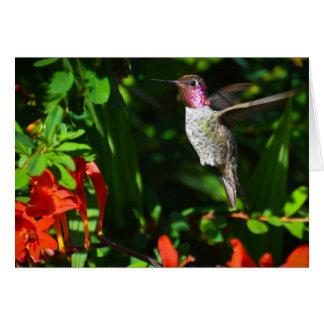 O colibri de Anna Cartão