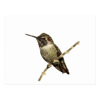 O colibri de Anna Cartão Postal
