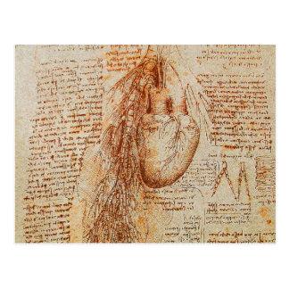 O coração e o pergaminho das artérias brônquicas cartão postal