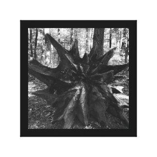 O coto de árvore enraíza a foto preto e branco da