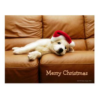 O filhote de cachorro veste um chapéu do Natal e o Cartão Postal